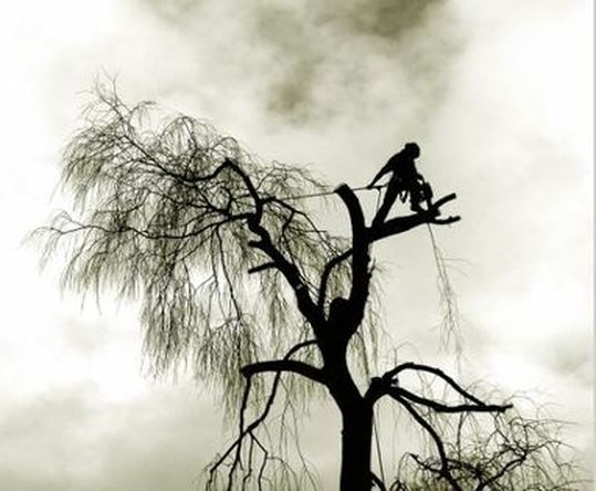 Tree surgeon Nottingham