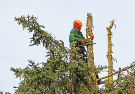 Tree Surgery Prices in Nottingham