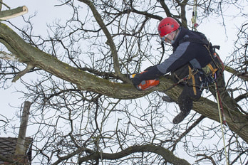 Arborist Prices in Nottingham