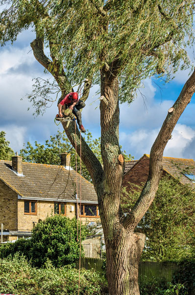 Nottingham Tree Services