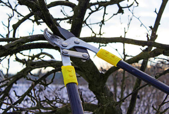 Nottingham Tree Services Prices
